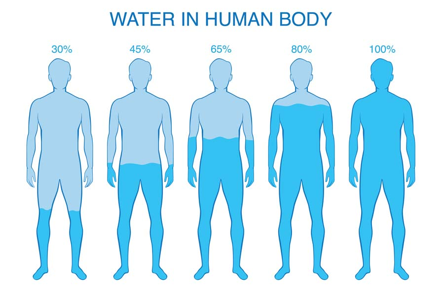 Body Water Content & Hydration